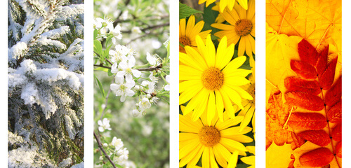 saisons beauté